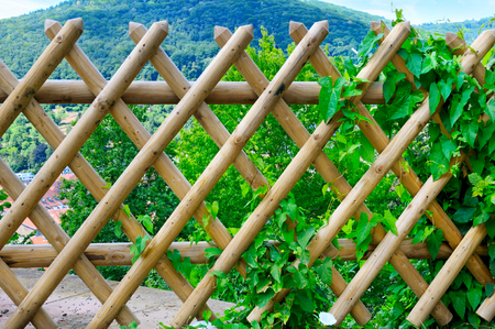 wooden fence and green plants Stock Photo