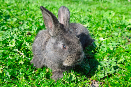 little rabbit on green grass background Stock Photo