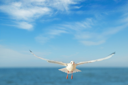 wingspan: seagull in flight against the blue sky