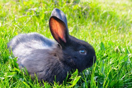little rabbit on green grass background Stock Photo