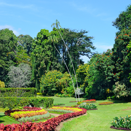 magnificent tropical park with flower beds, lawns and trees
