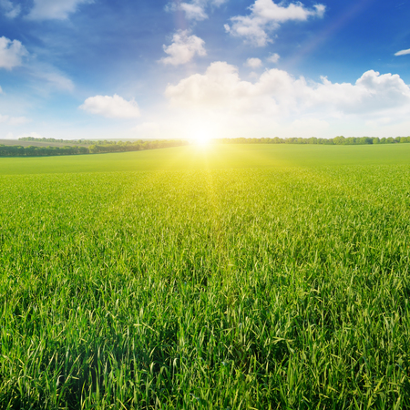 フィールド、日の出と青空 写真素材