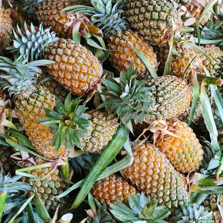 bright background of fresh juicy pineapples Reklamní fotografie - 71533422