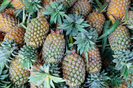 bright background of fresh juicy pineapples Reklamní fotografie
