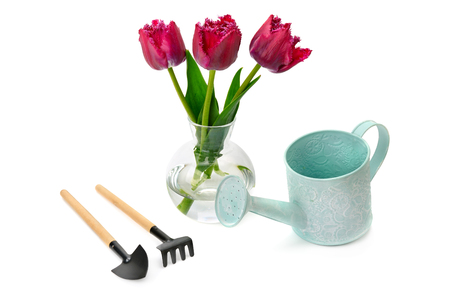 Tulips and garden equipment isolated on white background