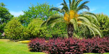 dirt: Tropical park with palm trees and flower gardens Stock Photo