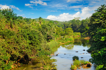Tropical forest on the banks of the river and the blue cloudy sky