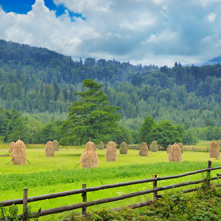 haymow: Haystacks in the mountain valley of the Carpathian mountains