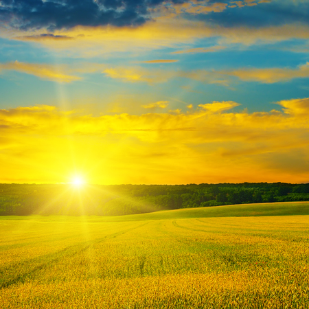 Wheat field and a delightful sunrise