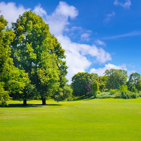 Summer park with deciduous trees and broad lawns. In the blue sky, light cumulus clouds. Stock Photo