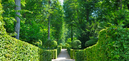 Summer park with hedges and alleys. Cozy garden for hiking. Wide photo. Stock Photo