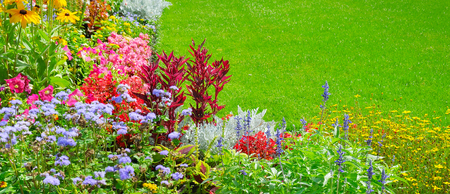 Summer flower bed and green lawn. Floral pattern. Wide photo.