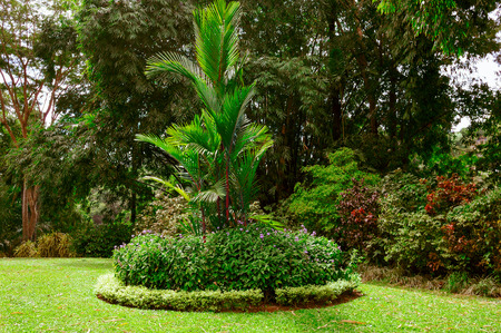 Magnificent tropical park with beautiful trees and flowers. 版權商用圖片 - 96732378