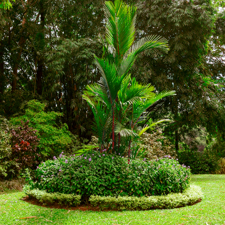 Magnificent tropical park with beautiful trees and flowers. 版權商用圖片 - 101845593