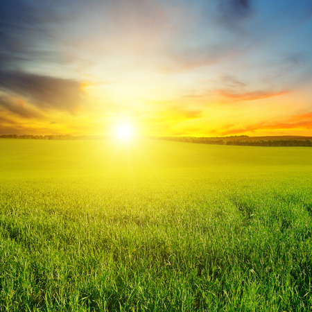 Green field and blue sky with light clouds. Above the horizon is a bright sunrise. Agricultural landscape.