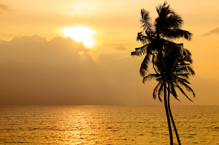 Golden sunset over the ocean. Against the sky the dark silhouette of a coconut tree.