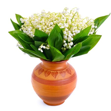 Lily of the valley in flower pot. Isolated on white background