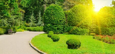 Hedges and ornamental shrub in a summer park. Wide photo. Stockfoto
