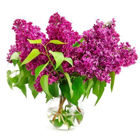 Bouquet de lilas dans un vase en verre isolé sur blanc Banque d'images