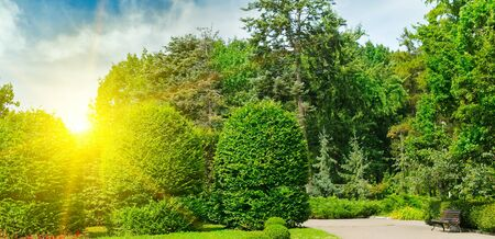 Hedges and ornamental shrub in a summer park. Wide photo. 스톡 콘텐츠