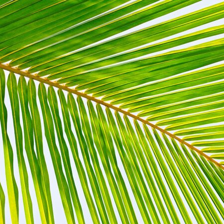 Palm trees against the blue sky, Background .