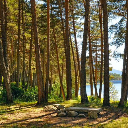 Picturesque autumn landscape. Forest with coniferous trees on a bright sunny day.