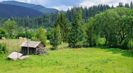 Slopes of mountains and coniferous trees . Rural landscape.