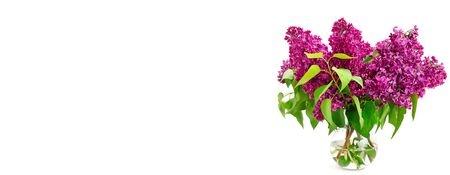 Bouquet of lilac in a glass vase isolated on white background. Free space for text. Wide photo.