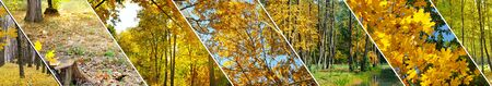 Autumn forest with yellow leaves . Panoramic collage. Wide photo. 스톡 콘텐츠