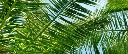 palm leaves and blue sky. 스톡 콘텐츠