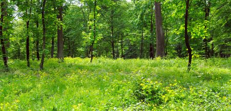 Summer park, green meadow and blue sky. Wide photo. 스톡 콘텐츠