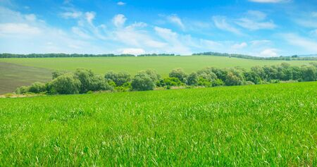 Picturesque green field and blue sky. Agricultural landscape. Wide photo. 스톡 콘텐츠