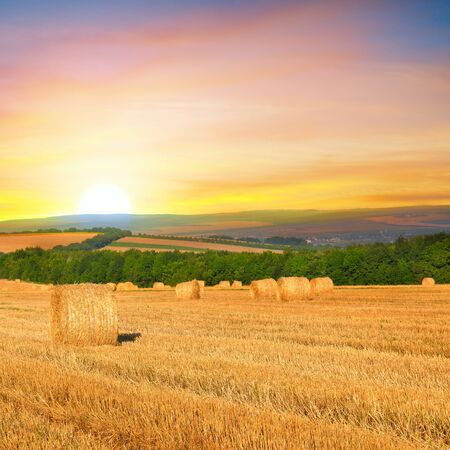 Straw bales on a wheat field and and sunrise. Agricultural landscape.