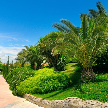 Tropical garden with palm trees and green lawns. Bright sunny day.