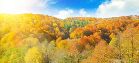 Autumn landscape. Bright yellow and orange leaves of trees in the sun.