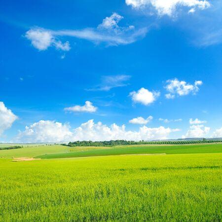 Pintoresco campo verde y cielo azul