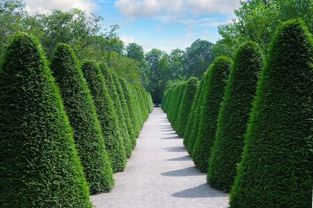 Row of green trees shrubs in the city park. Globular thuja Danica. landscape design Stock fotó