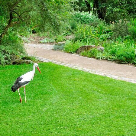 Stork in the city garden. The concept is the protection of wildlife. 스톡 콘텐츠