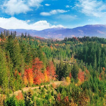Autumn in the mountains. Colorful forests on the mountain slopes.