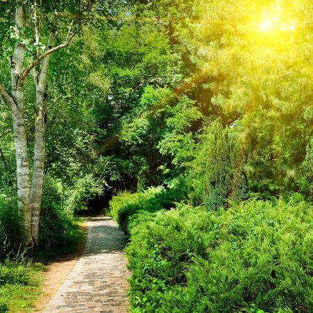 Summer garden with beautiful green lawns and sun. 版權商用圖片