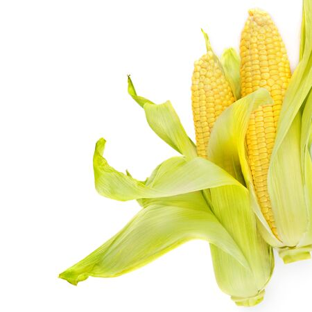 Double sweet corn ears isolated on white background . Free space for text. 版權商用圖片