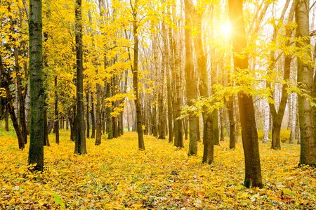 Beautiful colored trees in autumn landscape and sun. Outdoor and nature. Stok Fotoğraf