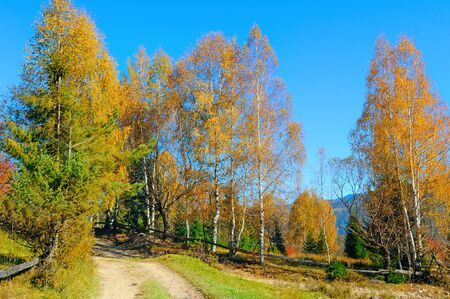 Beautiful colored trees in autumn landscape and sun. Outdoor and nature. Standard-Bild