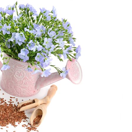 Flax seeds and a bouquet of flax flowers in a decorative watering can isolated on a white background. Free space for text.