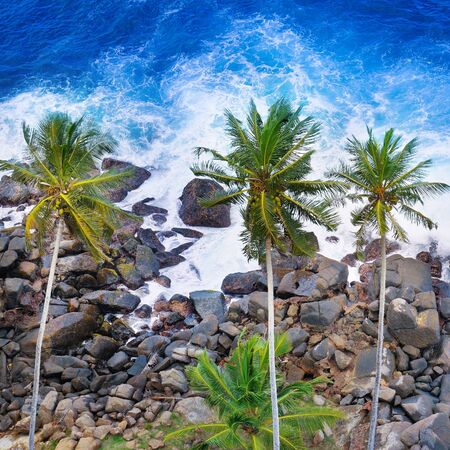 Aerial top view of palm trees and a rocky shore.