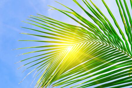 A bright and sunny palm tree branch with a sun flare.
