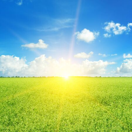 Green field and sun on blue sky with light clouds. Standard-Bild