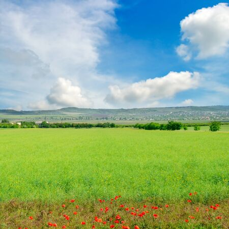 Green rapeseed field with red poppies and blue sky. Agricultural landscape. Banco de Imagens