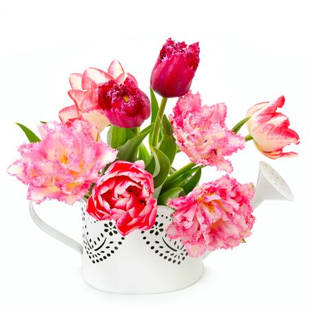 Bouquet of beautiful tulips in a decorative watering can isolated on a white background. 版權商用圖片