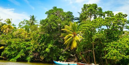 Picturesque tropical landscape. Lake, coconut palms and mangroves. Sri Lanka. Wide photo 版權商用圖片